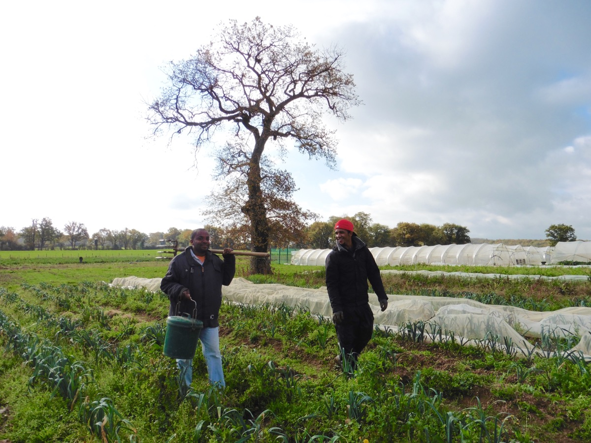 Le champ des poireaux
