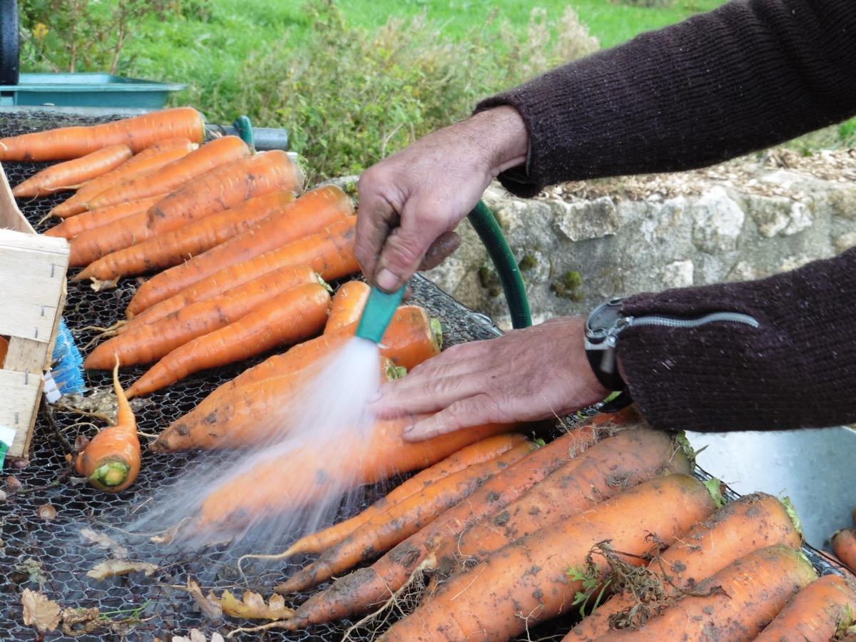 Nos légumes sont lavés soigneusement